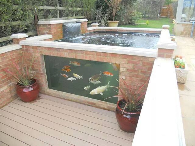 Decor pools koi depot mobile uploads facebook for Pool with koi pond