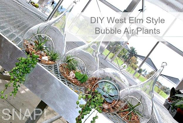 DIY West Elm Style Bubble Air Plants - SNAP!