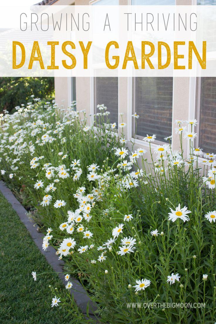 Gardening And Outdoor Decor Tips For Growing A Daisy Garden