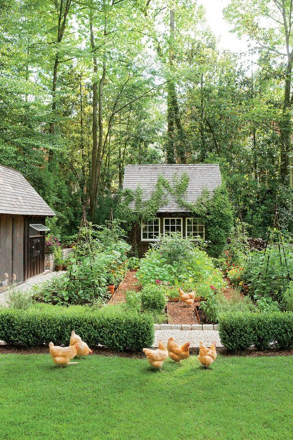 Outdoor Decorating/Gardening : Chickens would destroy that