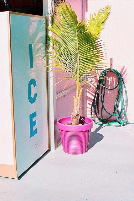 ice . pink...