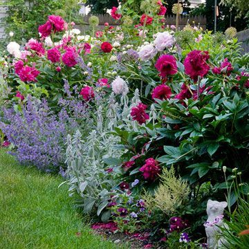 Plants with multiple petals, such as roses and peonies, are cottage-style favori...