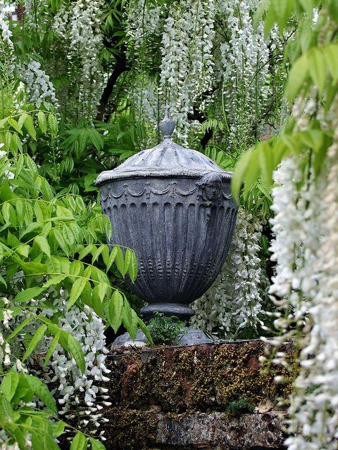 Sissinghurst Urn & Wisteria