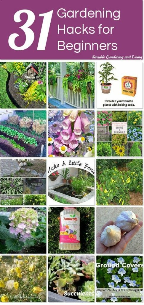 Outdoor decorating gardening 31 gardening hacks for Outdoor decorating hacks