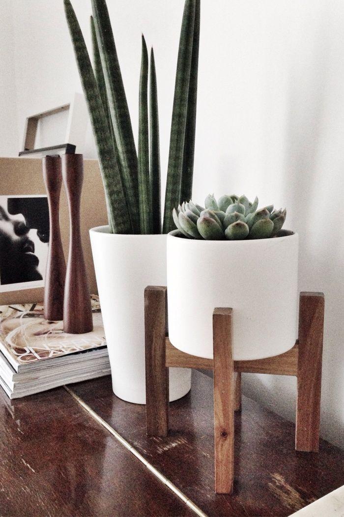 Vases Home Decor Plants In The Home Cactus Decor Succulent