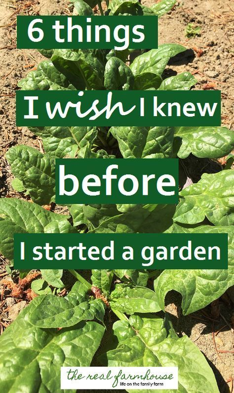 good advice when for when you're starting your first garden or just starting...