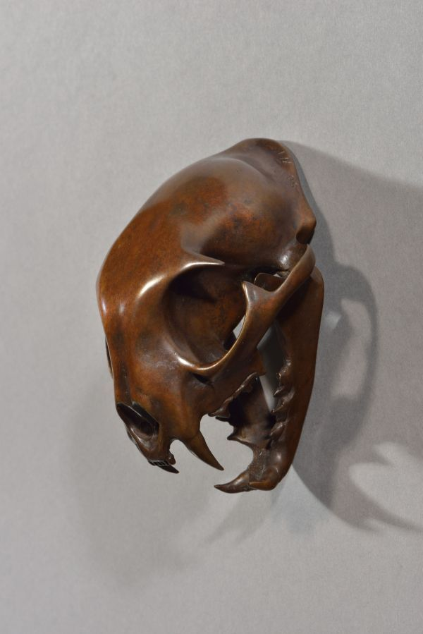 #Bronze #sculpture by #sculptor Simon Gudgeon titled: 'Bobcat (Bronze Head/Skull...