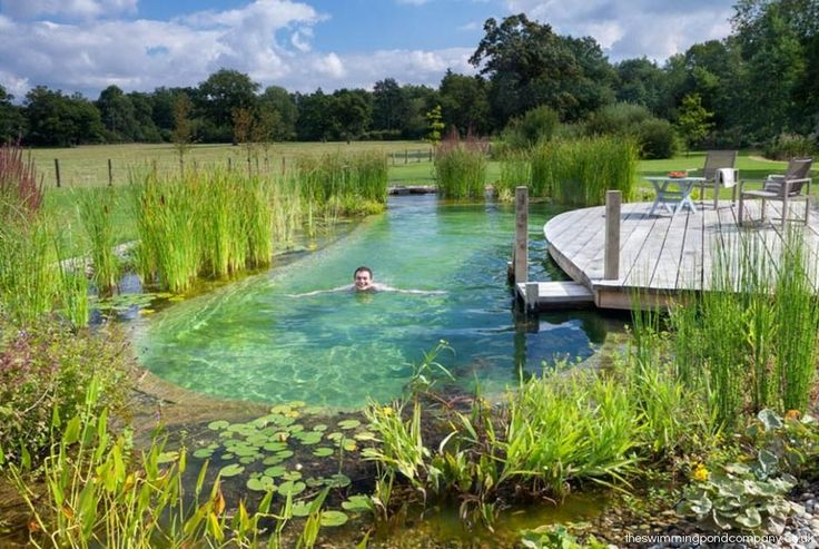 Decor - Pools : Building A Natural Swimming Pond | Welcome [www ...