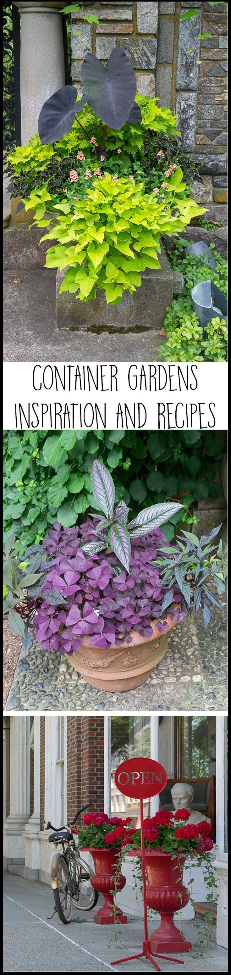 Container Garden Ideas: Inspiration and Recipes #2 • Nourish and Nestle