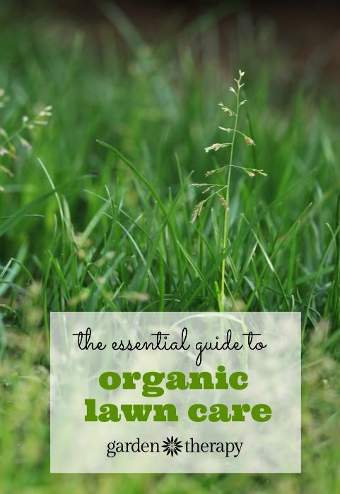 The Essential Organic Lawn Care Guide