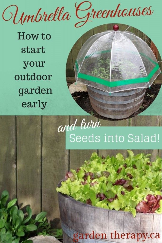 Seed Starting in Mini Greenhouses