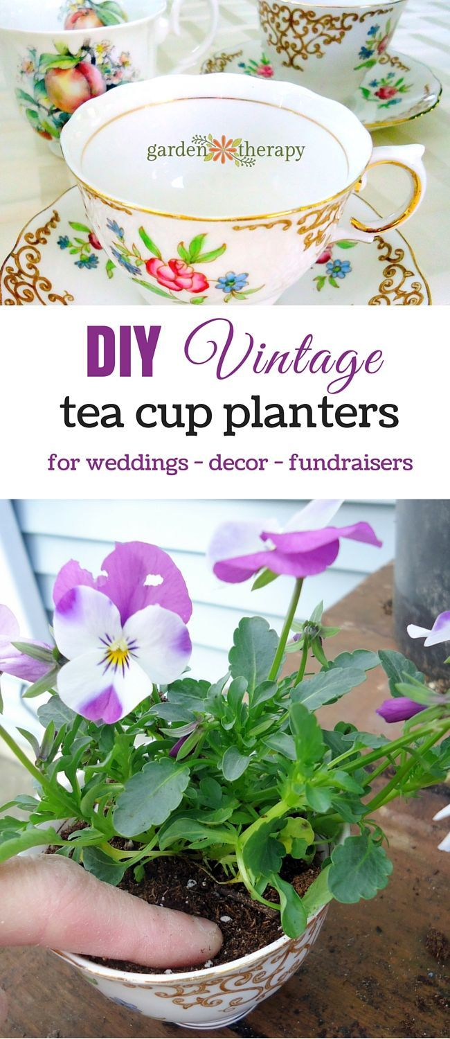 Vintage Teacup Planters: a Great Fundraising Tool