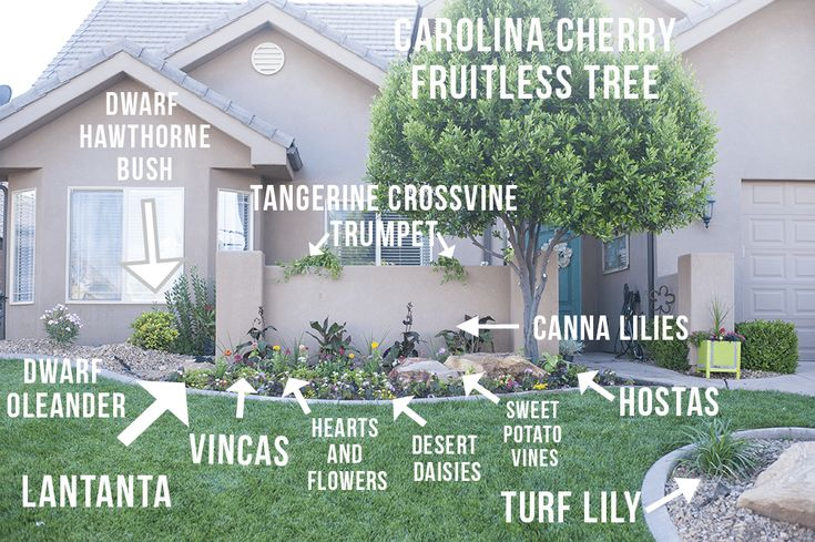 Front Yard Landscape Ideas! These do so well in hot climates!   #landscapes #fro...