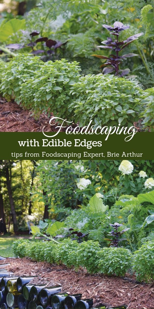 Outdoor Decorating/Gardening : Edible Edges Are A Smart
