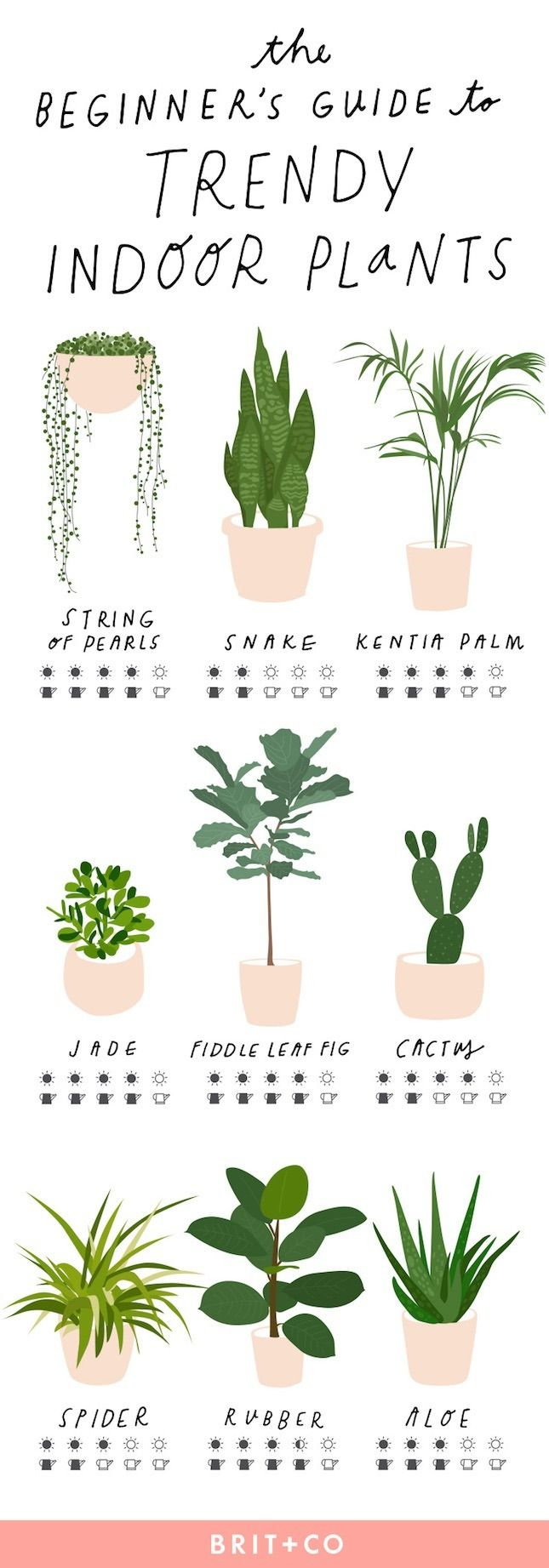 Home Decor - Living Room : Keep your indoor plants strong + healthy ...