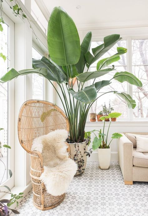 modern licht interieur in boston met ratanstoel en grote plant