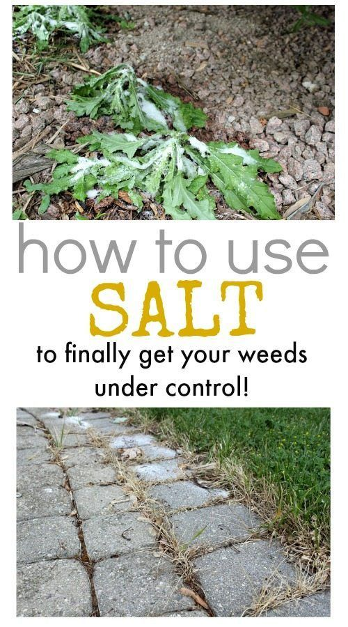Did you know you can effectively use salt to kill weeds?  These tips will help ...