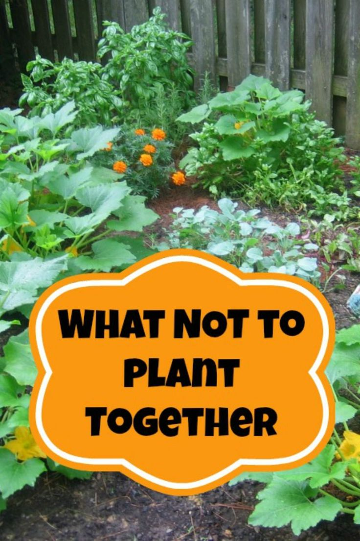 Companion Planting - What Not to Plant Together