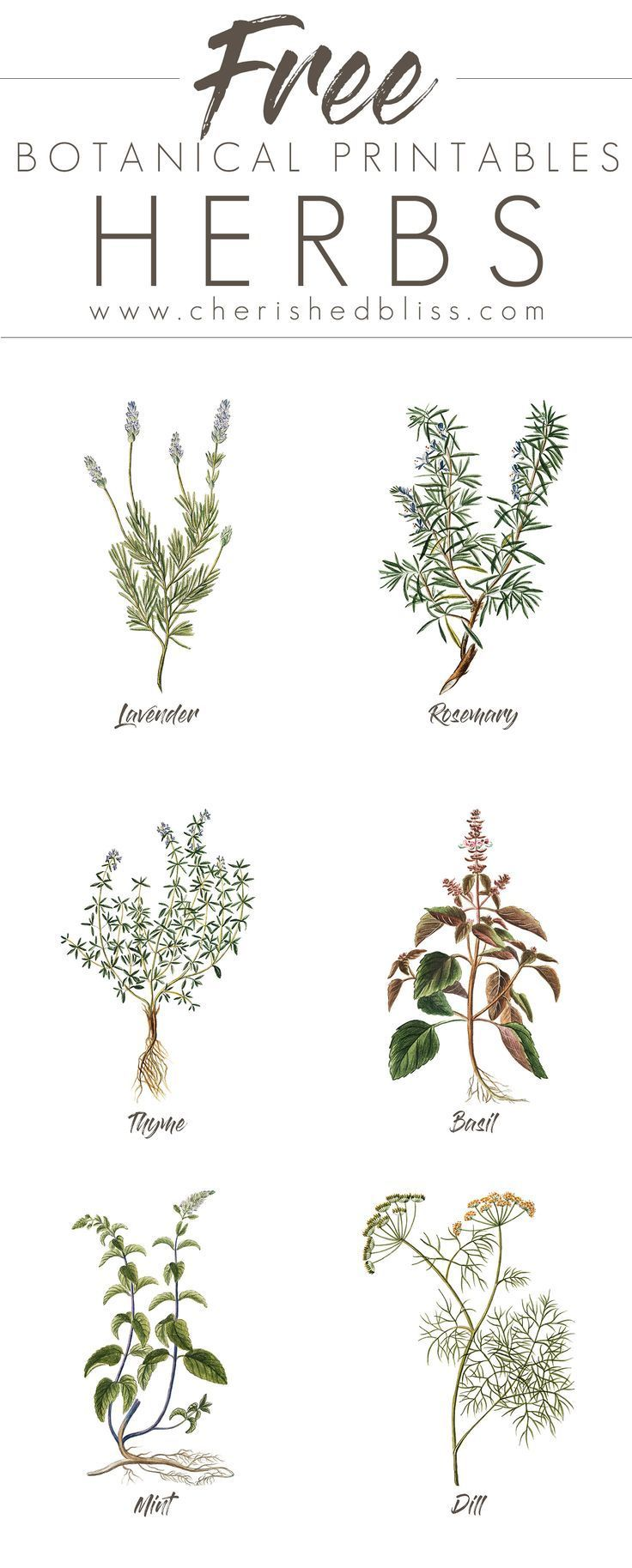 These lovely Free Spring Herb Printables are a simple a cheap way to decorate yo...