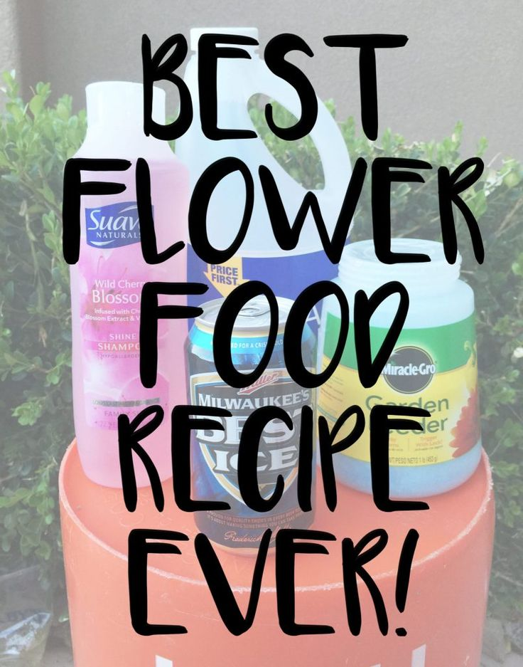Best DIY Flower Food Recipe Ever!