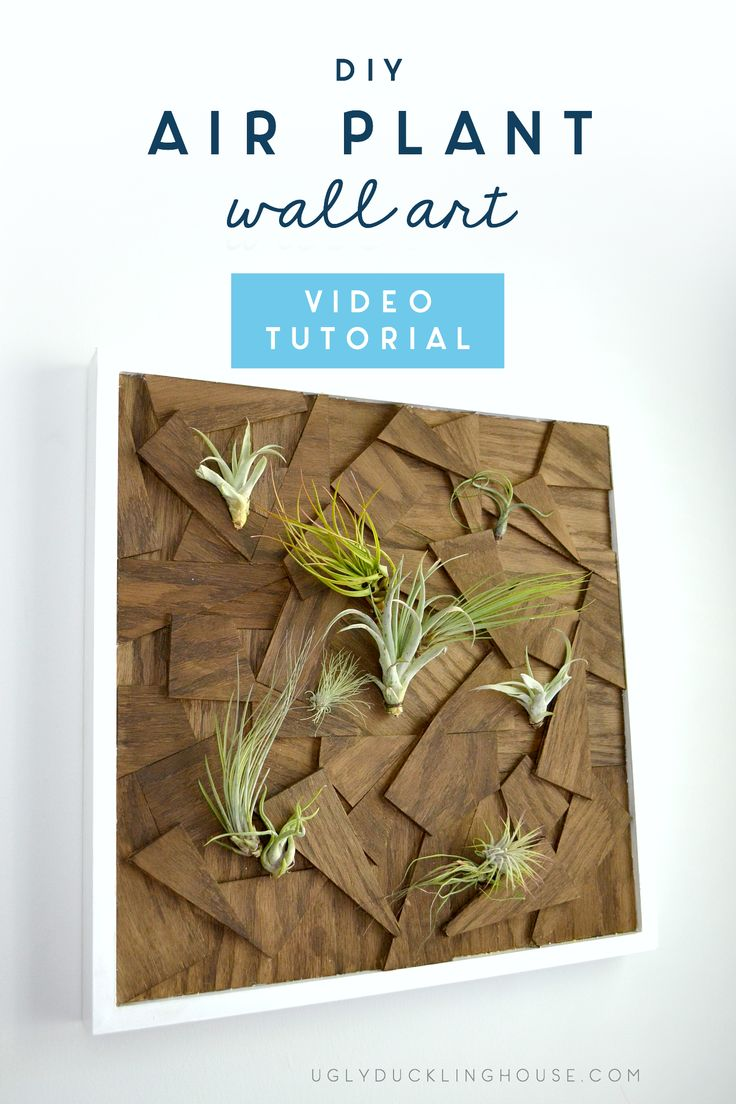 DIY air plant wall art - scrap wood plywood - indoor plants #woodworking #wallar...