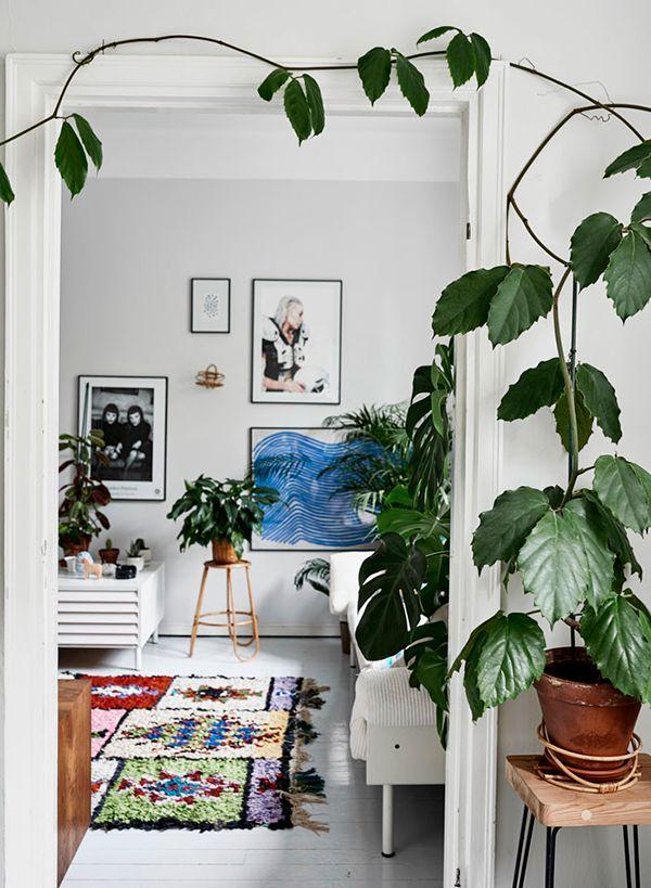 green home book by Susanna Vento.