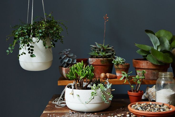 7 Indoor Plants That Are Near-Impossible to Kill — Food52