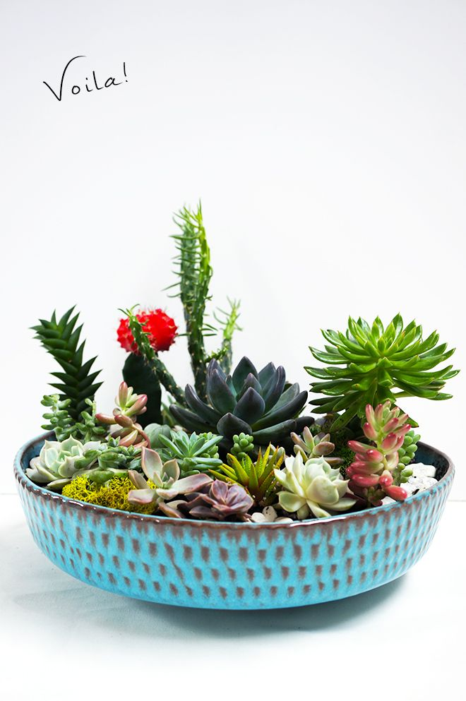This DIY succulent garden is simple to recreate and will last through the season...