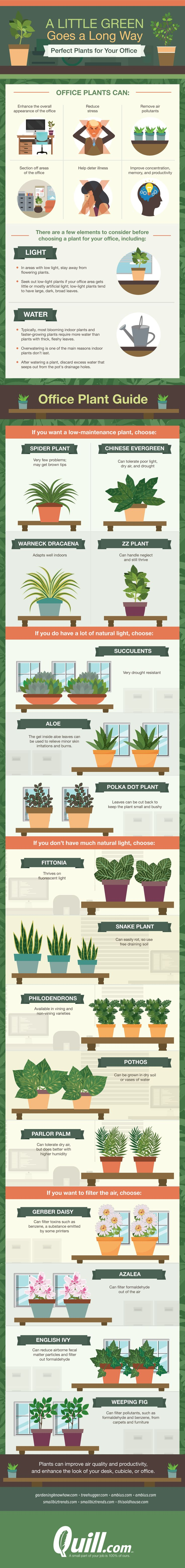 A Little Green Goes a Long Way: Plants Perfect for Your Office