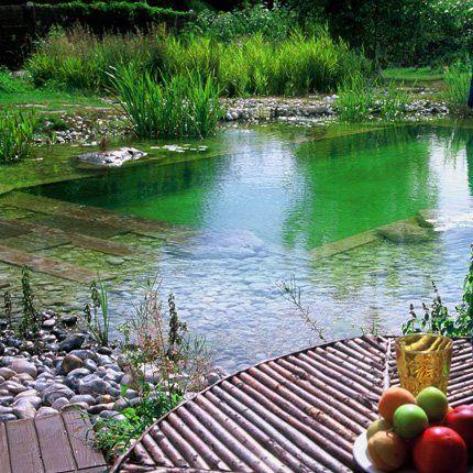 Quelle différence entre une piscine naturelle et une piscine traditionnelle ?