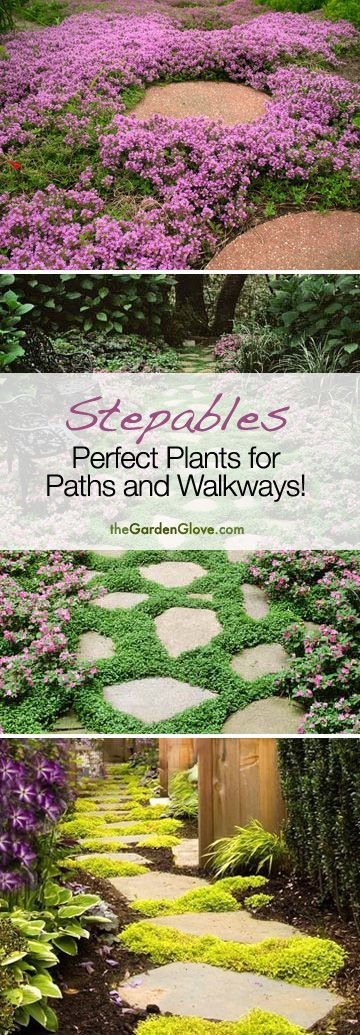 Stepables: Perfect Plants for Paths and Walkways