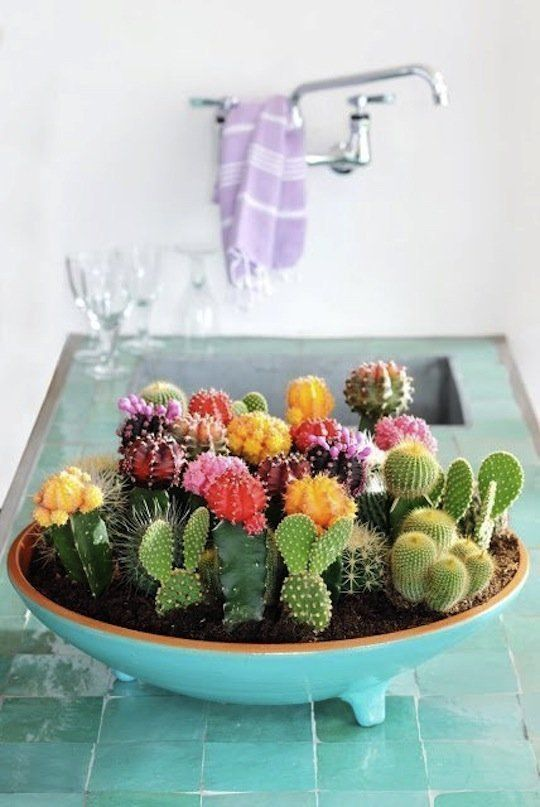 Craftaholics Anonymous®   A bowl of art! DIY your cactus garden to bring life t...