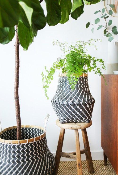 An Indoor Hanging Garden. Now on the blog.