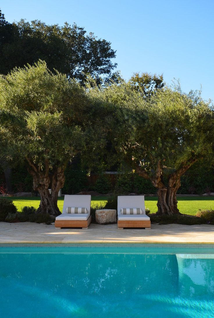 Olive Tree Lounge ItalianteTuscan Pool by Greenblott Design