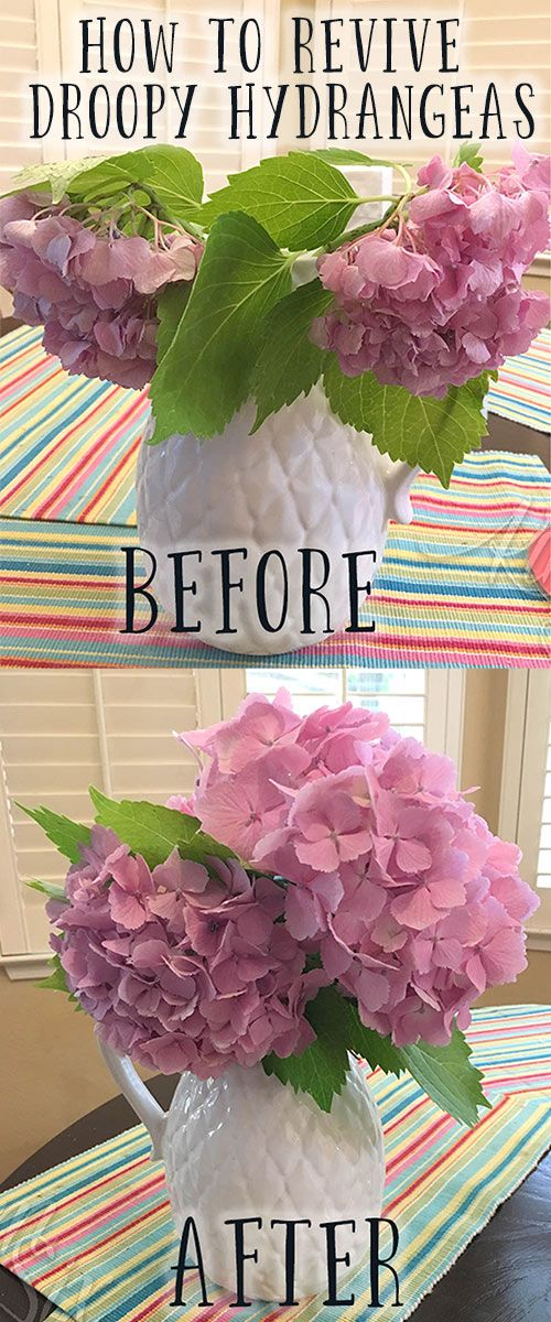 How to Save Drooping Hydrangeas after Cutting