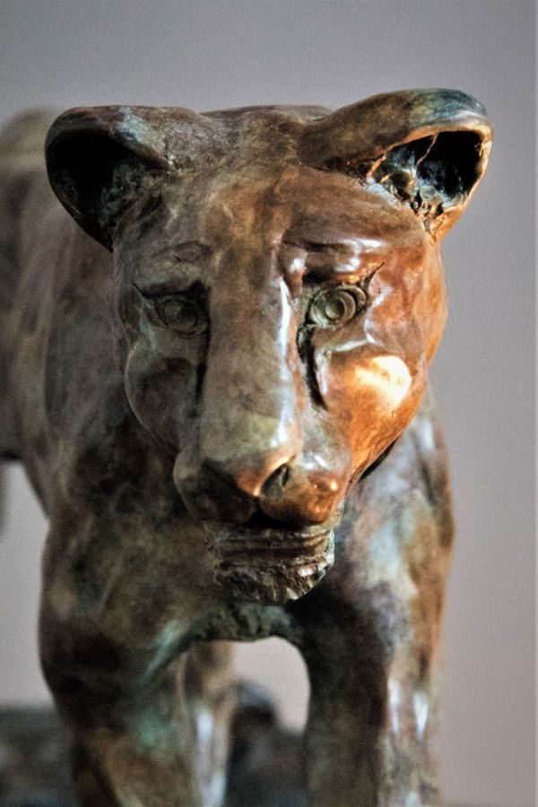 'Lioness (Bronze Pacing Hunting Tracking statue)' by Adrian Flanagan