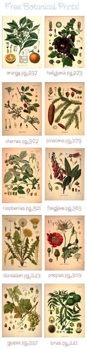 Free Botanical Art Prints by MyLittleCornerOfTheWorld