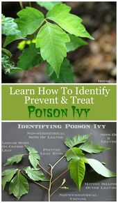 Poison Ivy 101: How To Identify, Treat And Prevent