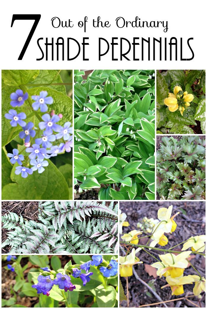 Shade Loving Perennials - You May Not Have Heard of Before.